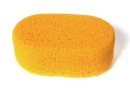 Sponge Oval Hydra