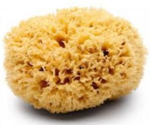 sponge wool